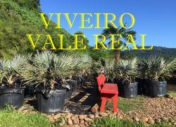 VIVEIRO VALE REAL