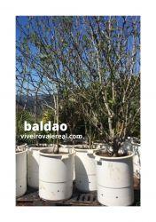 BALDÃO PLÁSTICO  175 litros Super Reforçado cor preta R$69,80